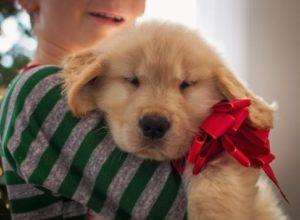 mascota de regalo